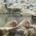 Jigokudani Monkey Park – Nagano Prefecture